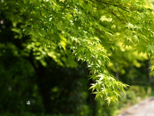 tender green_2.png