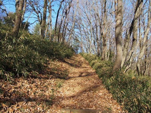 a path to the new place.jpg