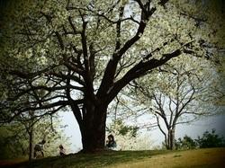 my favorite tree_12.jpg