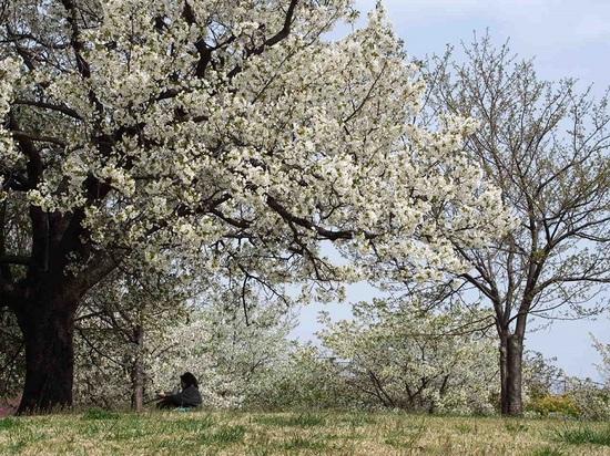 my favorite tree_13.jpg