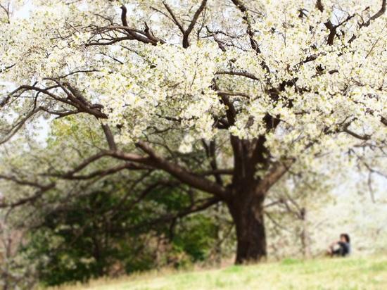 my favorite tree_14.jpg