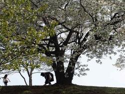 my favorite tree_2.jpg
