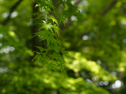 tender green_3.png